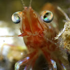 Alien Shrimp