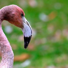 by Kishu Keshu - Animals Birds