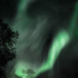 Night Wings of Green by Rebecca Weatherford - City,  Street & Park  Night ( night photography, alaska, northern lights, aurora, aurora borealis )