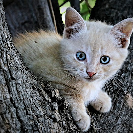 Kitten by Pieter J de Villiers - Animals - Cats Kittens