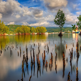 Mangroves by Arellano Galdo - Landscapes Travel