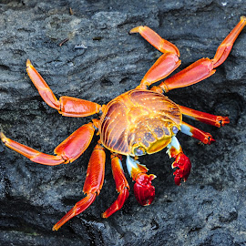 by Terry DeMay - Animals Sea Creatures