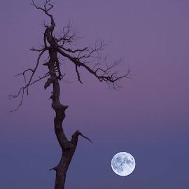 Moonrise in Shenandoah Park by Gwen Paton - Landscapes Mountains & Hills ( shenandoah park, virginia, moonrise )