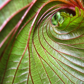 by Jeffrey Goodman - Nature Up Close Leaves & Grasses