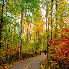 Fall Season  by Joseph Law - Landscapes Forests