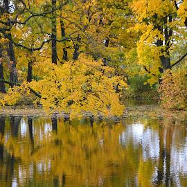 by Vida Jankaitiene - Nature Up Close Trees & Bushes (  )