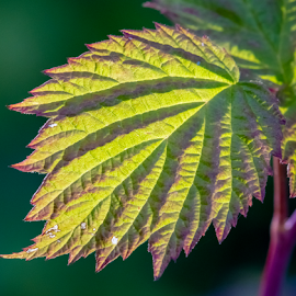 by Keith Sutherland - Nature Up Close Leaves & Grasses
