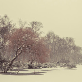Edge of Freezing by Justin Welch - Landscapes Forests ( cup, sepia, winter, ice, snow, trees, best, forest, beauty, landscape, favorite, favourite )