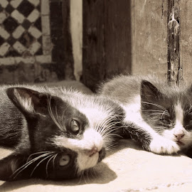 by Ayoub Halime - Animals - Cats Kittens