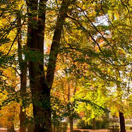 Autumn sun in park. by Dagmar Germaničová - City,  Street & Park  City Parks ( park, autumn, sun )
