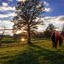 Kentucky Autumn Sunset by Eugene Linzy - Landscapes Prairies, Meadows & Fields ( field, mare, fence, sun reflection, tree, horses, colt, sunset, pond )
