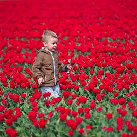 by Bencik Juraj - Babies & Children Children Candids ( child, tulip garden, tulip, flowers )