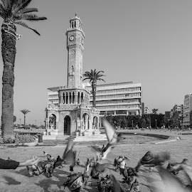 Konaq clock by Grigoris Koulouriotis - Buildings & Architecture Public & Historical ( clock, square, turkey, birds, izmir )