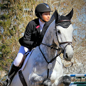 by Lena Arkell - Sports & Fitness Other Sports ( show jumping, jumping, canada, dapple gray, helmet, dapples, jumps, spruce meadows, rider, alberta, calgary,  )