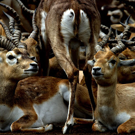 Group by Rohit Lamba - Animals Other (  )