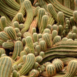 Cactus Patterns by Simon Anon Satria - Nature Up Close Other plants ( patterns, indonesia, cactus )
