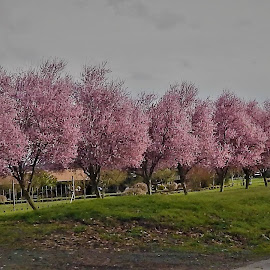 Pink Trees by Lavonne Ripley - Nature Up Close Trees & Bushes