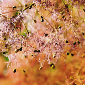 Pastel by Vero Vero - Nature Up Close Leaves & Grasses ( pastel, orange, color, peach, pink, villi, bokeh )
