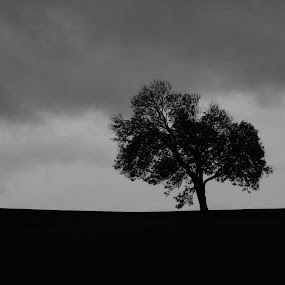 Dark Tree by Alex Nicholson - Landscapes Starscapes ( tree, moody, cloudy, landscape, dusk )