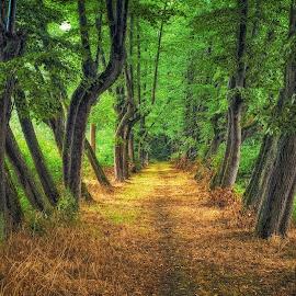 ... by Tomasz Marciniak - Nature Up Close Trees & Bushes