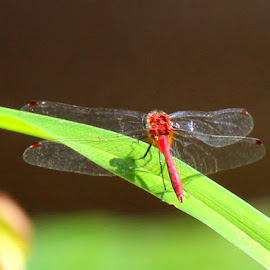 by Tracey Guaiana - Novices Only Macro ( red, bugs, insects )
