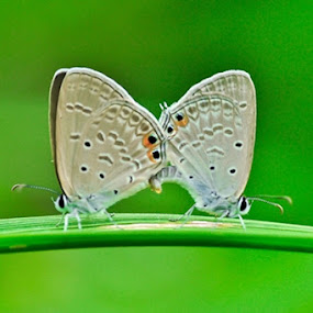 Duo Skiper by Idham Halid - Nature Up Close Trees & Bushes