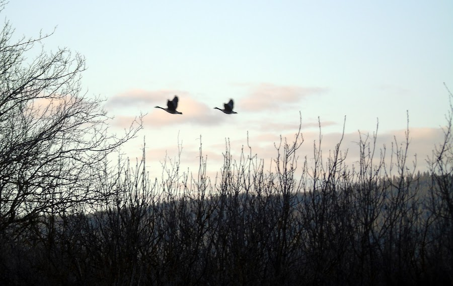 FREE BIRD by Cynthia Dodd - Novices Only Landscapes ( clouds, sky, nature, trees, birds )
