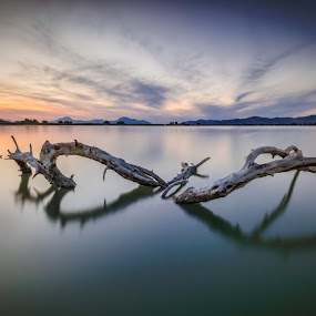 The Heart of Nature by Giorgos Makropoulos - Landscapes Sunsets & Sunrises ( water, orange, sunset beauty, reflection, wood, waterscape, color, sunset, salt lake,  )