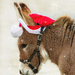 Nubbin, the rescue donkey by Jenny Gandert - Public Holidays Christmas ( donkey, rescue, christmas, baby, cute )