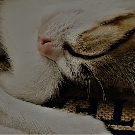 by Orpa Wessels - Animals - Cats Portraits