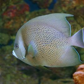 by Steve Tharp - Animals Fish
