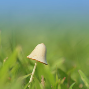 alone by Yuliani Liputo - Nature Up Close Mushrooms & Fungi