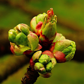 by Vláďa Lipina - Nature Up Close Trees & Bushes