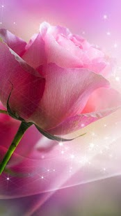 Pink Roses Live Wallpaper for pc