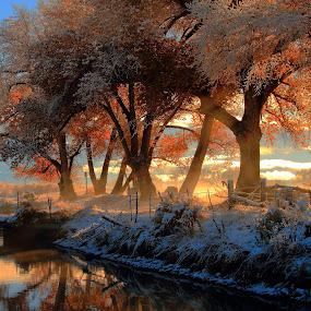 A Taste of Honey... by Dennis Ducilla - Landscapes Forests ( water, blue, fog, trees, fences, bridge, sunrise, gold, ducilla, sun, river )