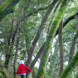 Lonely  walk by Navin Rana - People Family ( red jacket, castro vally, toddler, woods, hike )