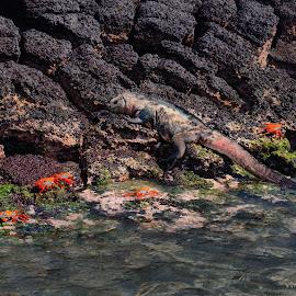 by Bob Buurman - Animals Sea Creatures
