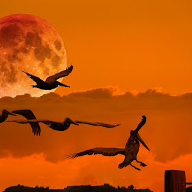 DA_Five Pelican and Blood Moon.jpg
