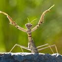 Running mantis