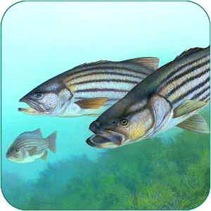 Fishing Fanatic - Fishing App with Solunar Charts For PC
