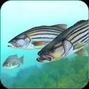 Fishing Fanatic - Fishing App with Solunar Charts For PC / Windows 7/8/10 / Mac – Free Download