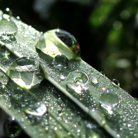 raindrops look like  tears by Lidija P - Nature Up Close Water ( color, colors, landscape, portrait, object, filter forge )