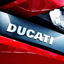 Ducati by David Sheppard - Transportation Motorcycles ( ducati motorbike motorcycle speed red bike race )