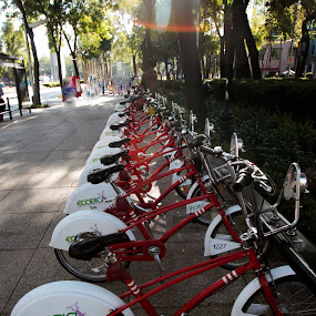 waiting by Cristobal Garciaferro Rubio - Transportation Bicycles ( bicycles, tourist, mexico city, mexico, bicycle )