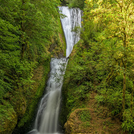 Lush Oregon by Claus Dahm - Landscapes Forests ( oregon, forrest, lush, waterfall, trees )