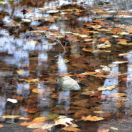 Fallen Leaves and Reflections by Tim Hall - Nature Up Close Leaves & Grasses