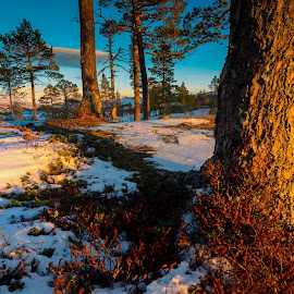 Woods norway 1 by Norman Pozuelos - Landscapes Forests