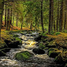 Bohmerwald by Michal Valenta - Landscapes Forests (  )