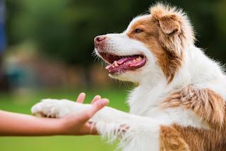 dog grooming Beveridge