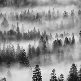 Waves by Paul Judy - Landscapes Mountains & Hills ( mountains, yosemite, fog, trees, pwcbwlandscapes, mist, relax, tranquil, relaxing, tranquility )